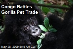 Congo Battles Gorilla Pet Trade