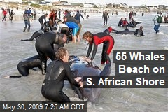 55 Whales Beach on S. African Shore