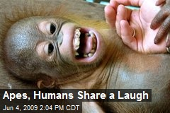 Apes, Humans Share a Laugh