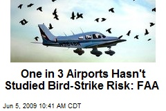One in 3 Airports Hasn't Studied Bird-Strike Risk: FAA