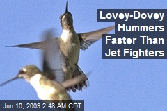 Lovey-Dovey Hummers Faster Than Jet Fighters