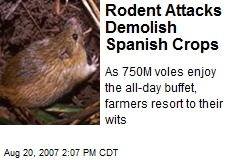 Rodent Attacks Demolish Spanish Crops