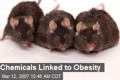 Chemicals Linked to Obesity
