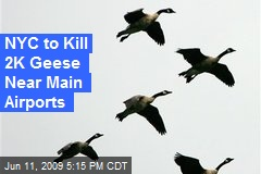 NYC to Kill 2K Geese Near Main Airports