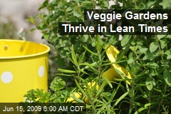 Veggie Gardens Thrive in Lean Times