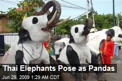 Thai Elephants Pose as Pandas