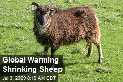 Global Warming Shrinking Sheep