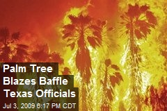 Palm Tree Blazes Baffle Texas Officials