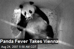 Panda Fever Takes Vienna