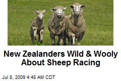 New Zealanders Wild & Wooly About Sheep Racing