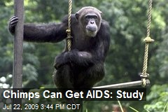 Chimps Can Get AIDS: Study