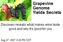 Grapevine Genome Yields Secrets