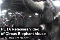 PETA Releases Video of Circus Elephant Abuse