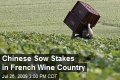 Chinese Sow Stakes in French Wine Country