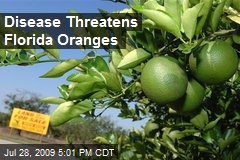 Disease Threatens Florida Oranges