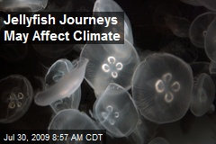 Jellyfish Journeys May Affect Climate