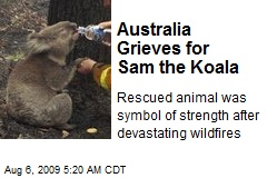 Australia Grieves for Sam the Koala