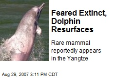 Feared Extinct, Dolphin Resurfaces