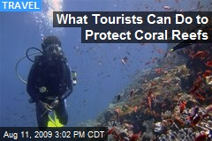 What Tourists Can Do to Protect Coral Reefs