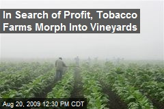 In Search of Profit, Tobacco Farms Morph Into Vineyards