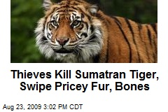 Thieves Kill Sumatran Tiger, Swipe Pricey Fur, Bones