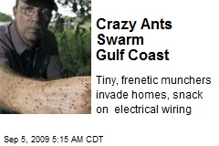 Crazy Ants Swarm Gulf Coast