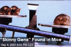 """Skinny Gene"" Found in Mice"