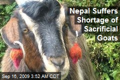 Nepal Suffers Shortage of Sacrificial Goats