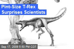 Pint-Size T-Rex Surprises Scientists