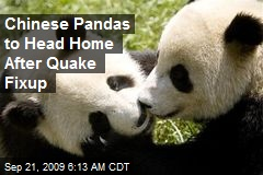 Chinese Pandas to Head Home After Quake Fixup