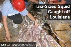 Taxi-Sized Squid Caught off Louisiana