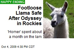 Footloose Llama Safe After Odyssey in Rockies