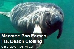 Manatee Poo Forces Fla. Beach Closing