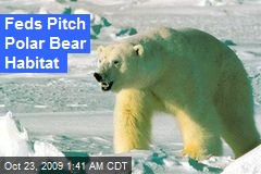 Feds Pitch Polar Bear Habitat