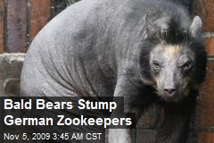Bald Bears Stump German Zookeepers