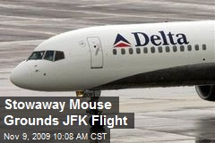 Stowaway Mouse Grounds JFK Flight