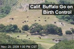 Calif. Buffalo Go on Birth Control