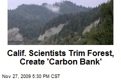Calif. Scientists Trim Forest, Create 'Carbon Bank'