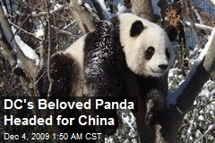 DC's Beloved Panda Headed for China