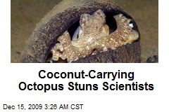 Coconut-Carrying Octopus Stuns Scientists