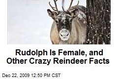 Rudolph Is Female, and Other Crazy Reindeer Facts