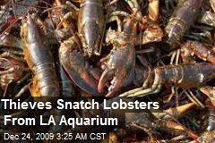 Thieves Snatch Lobsters From LA Aquarium