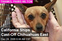 California Ships Cast-Off Chihuahuas East