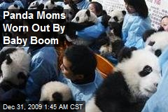 Panda Moms Worn Out By Baby Boom