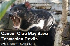 Cancer Clue May Save Tasmanian Devils