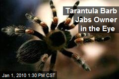 Tarantula Barb Jabs Owner in the Eye