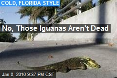 No, Those Iguanas Aren't Dead