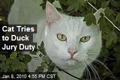 Cat Tries to Duck Jury Duty