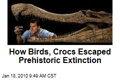 How Birds, Crocs Escaped Prehistoric Extinction