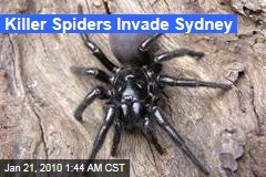 Killer Spiders Invade Sydney